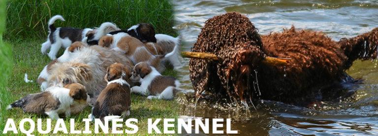 Aqualines Kennel